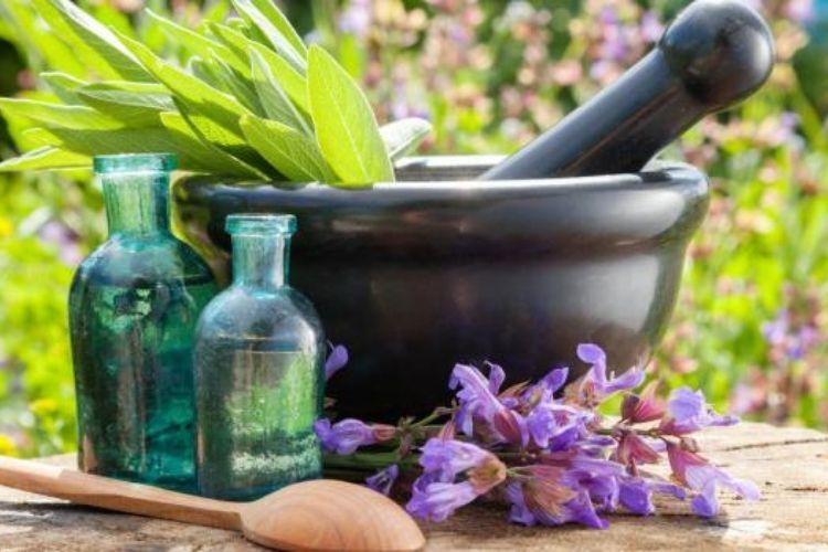 remède plante pour sinusite